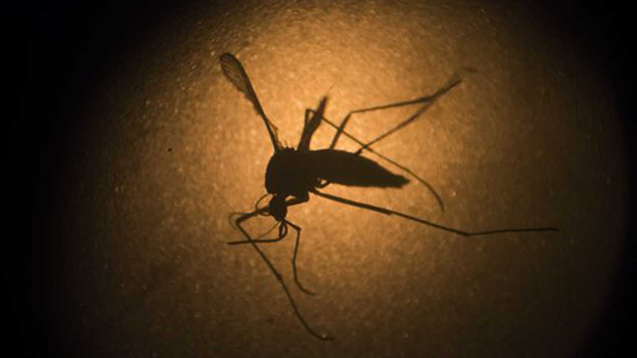 CDC Director Dr. Thomas Frieden weighs in on whether the Zika virus can be transmitted sexually and the Chipotle E. Coli mystery.