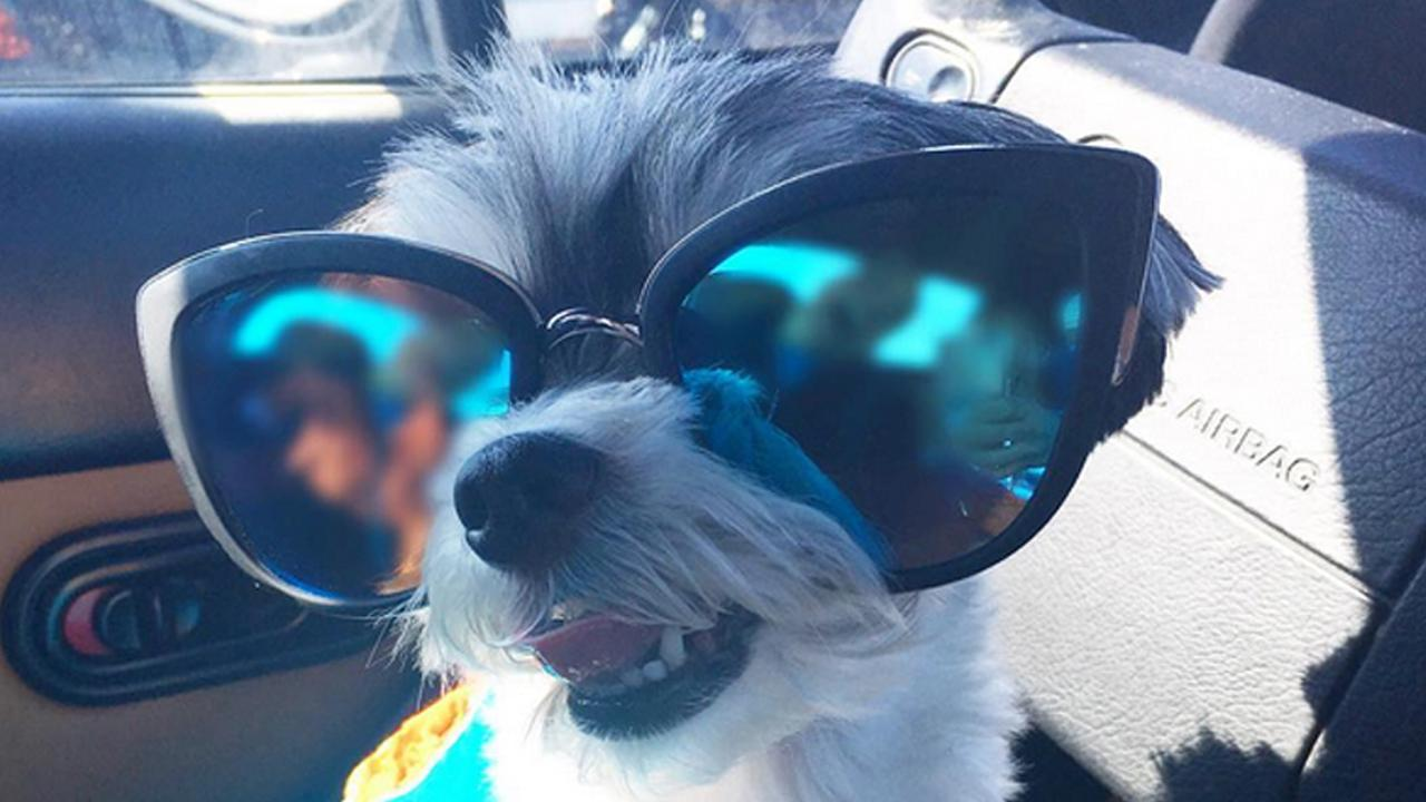 A social media starlet, Tinkerbelle the dog reveals what it takes to be famous and how much she makes in a year.