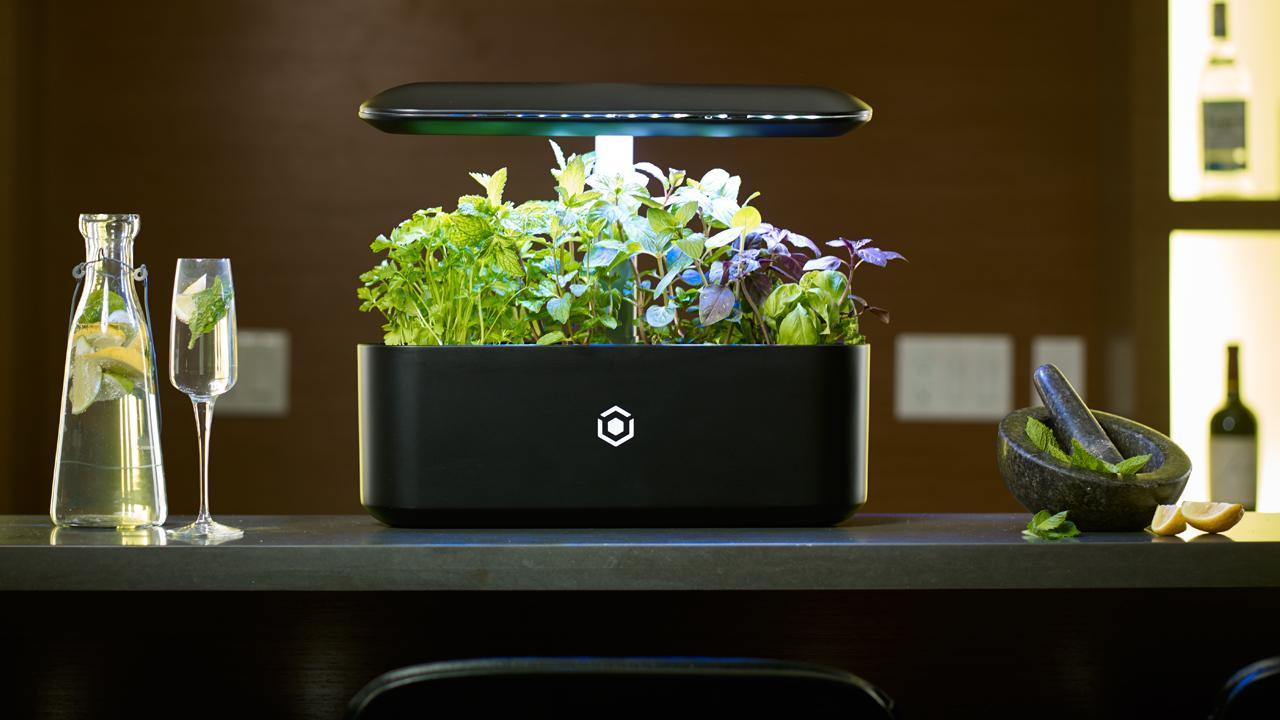 AVA technologies calls it the 'Nespresso' machine for gardeners. Take an exclusive look at the new AVA Byte smart garden of the future