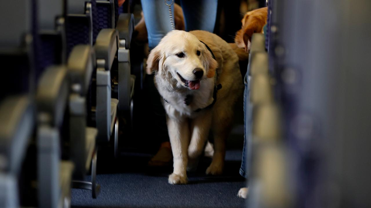 Fox Business Briefs: Airlines says number of animals in cabins is increasing along with complaints.