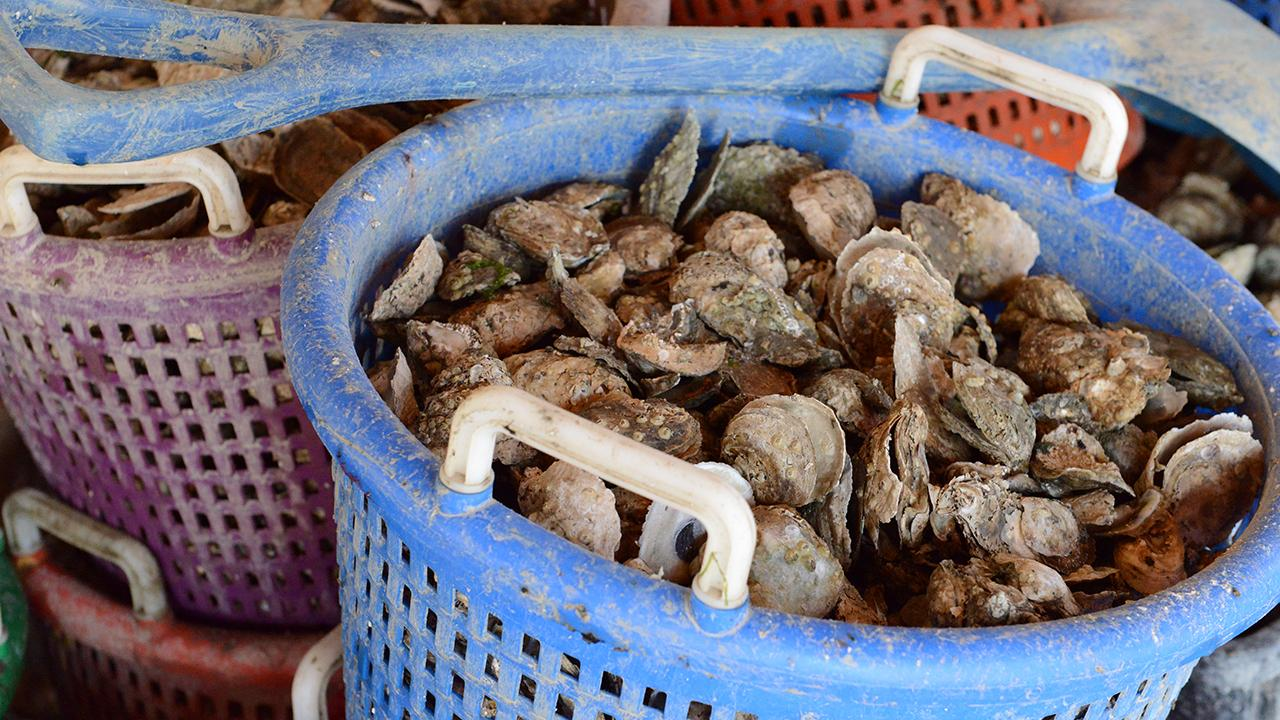 Cousins inherit oyster beds farmed by their family for a century, and are inspired to revive a dormant business.