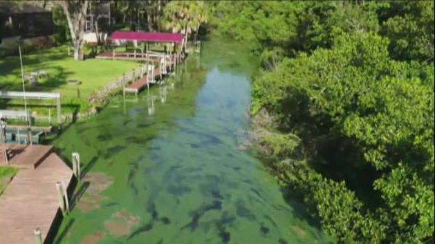 FBN's Jeff Flock on the algae crisis impacting residents and businesses in Florida.