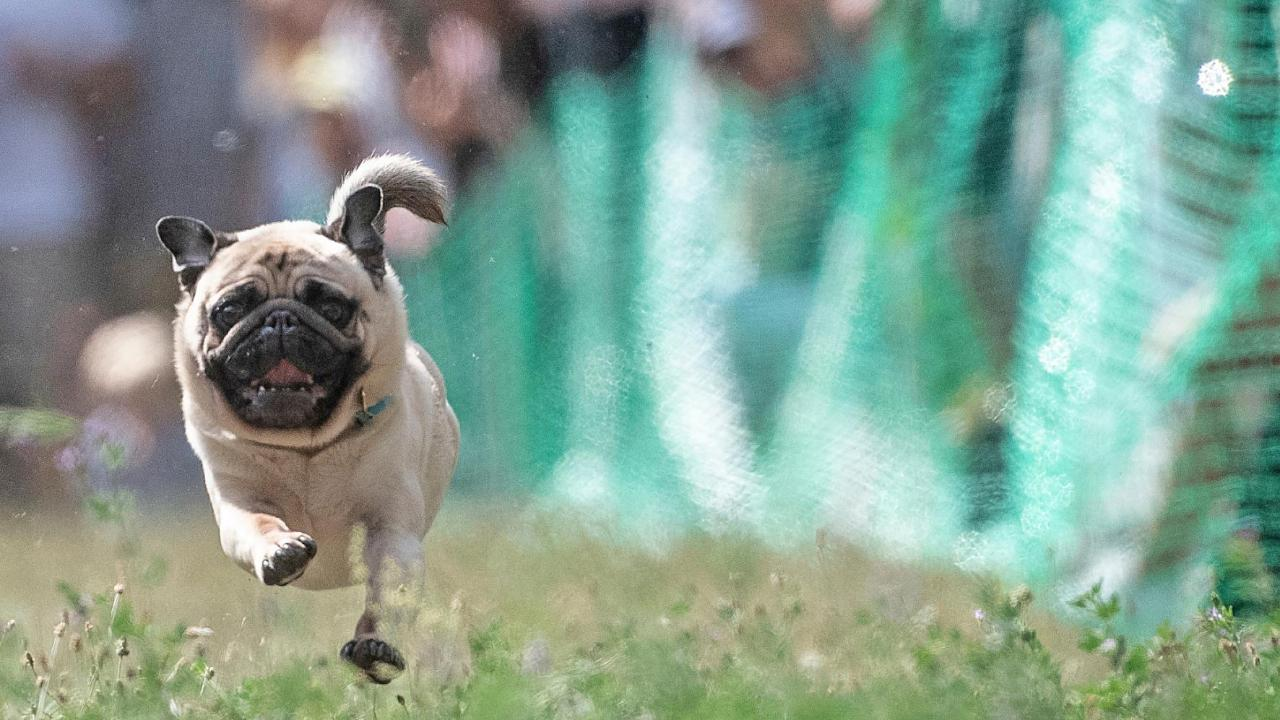 FBN's Susan Li on the rise in spending on pet insurance.