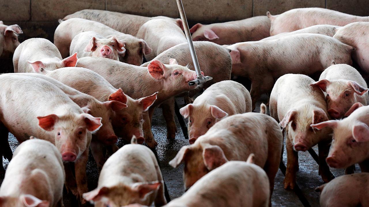 Hog farmer Brian Duncan on the impact of the China tariffs on U.S. farmers.