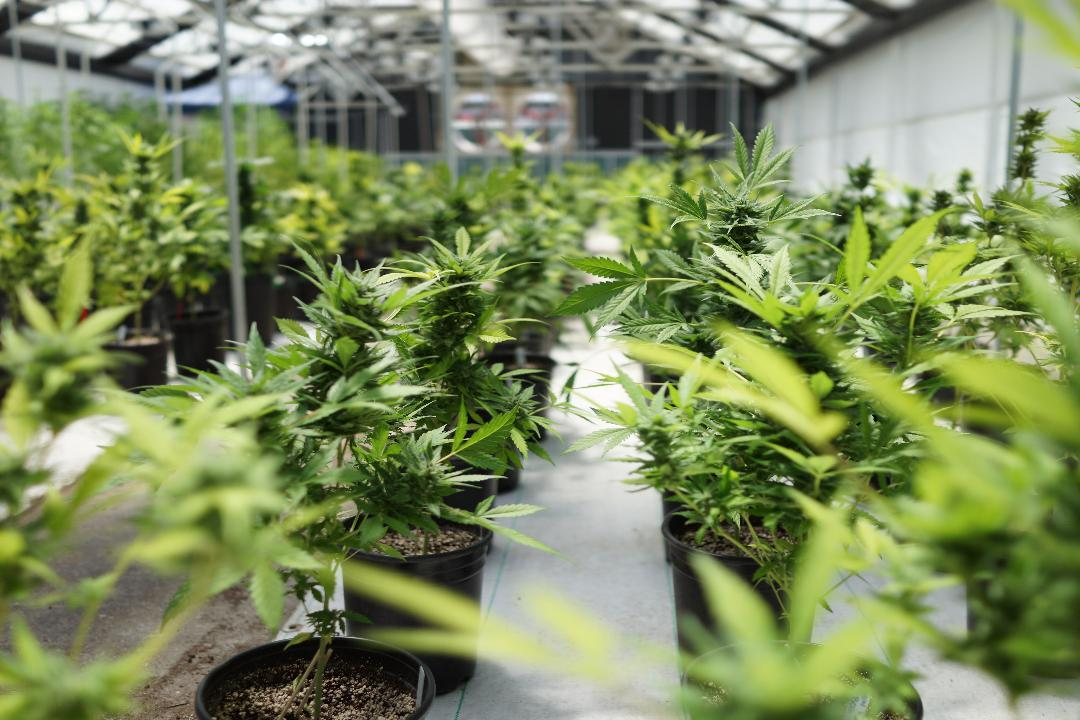 SOL Global Investments CEO Brady Cobb discusses the legalization of marijuana.