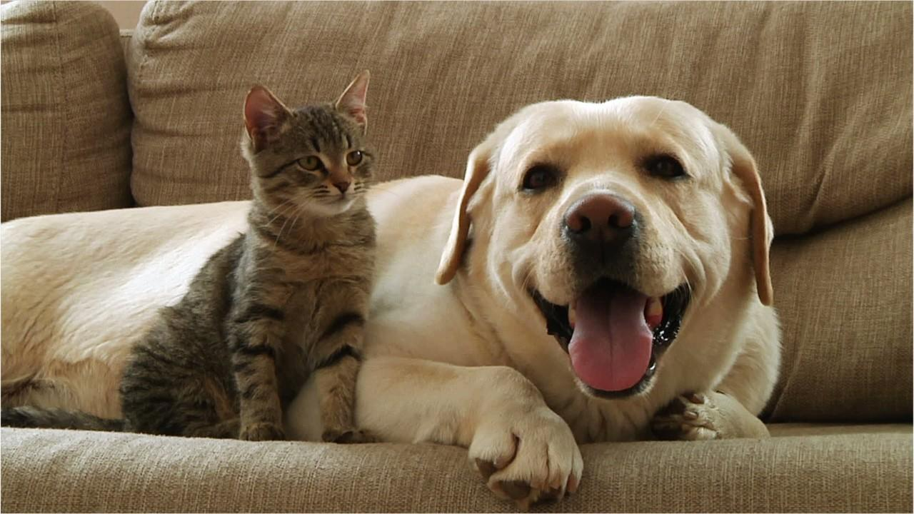 According to statistics obtained by the American Pet Products Association, Americans are spending more than $70 billion a year on the pet care industry.