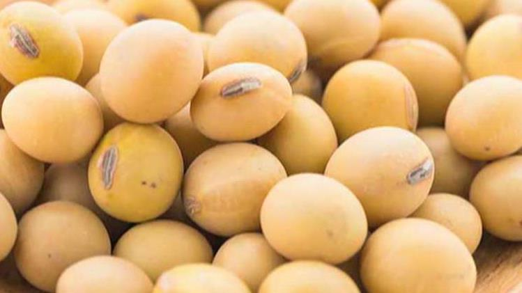 Beijing ramped up its purchases of soybeans ahead of 'phase one' of the U.S.-China trade deal being finalized.