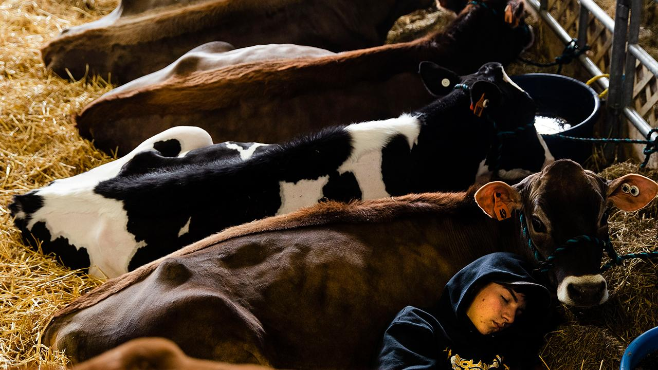 U.S. Dairy Export Council CEO and former Agriculture Secretary Tom Vilsack discusses how the China trade deal and the USMCA will affect the dairy industry.