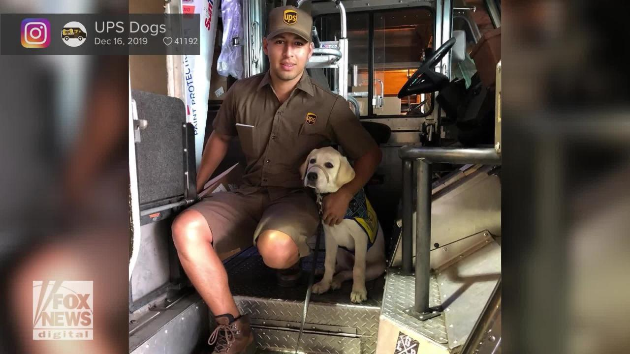 UPS Dogs is now a viral social-media profile where the four-legged friends who love their UPS drivers are featured.