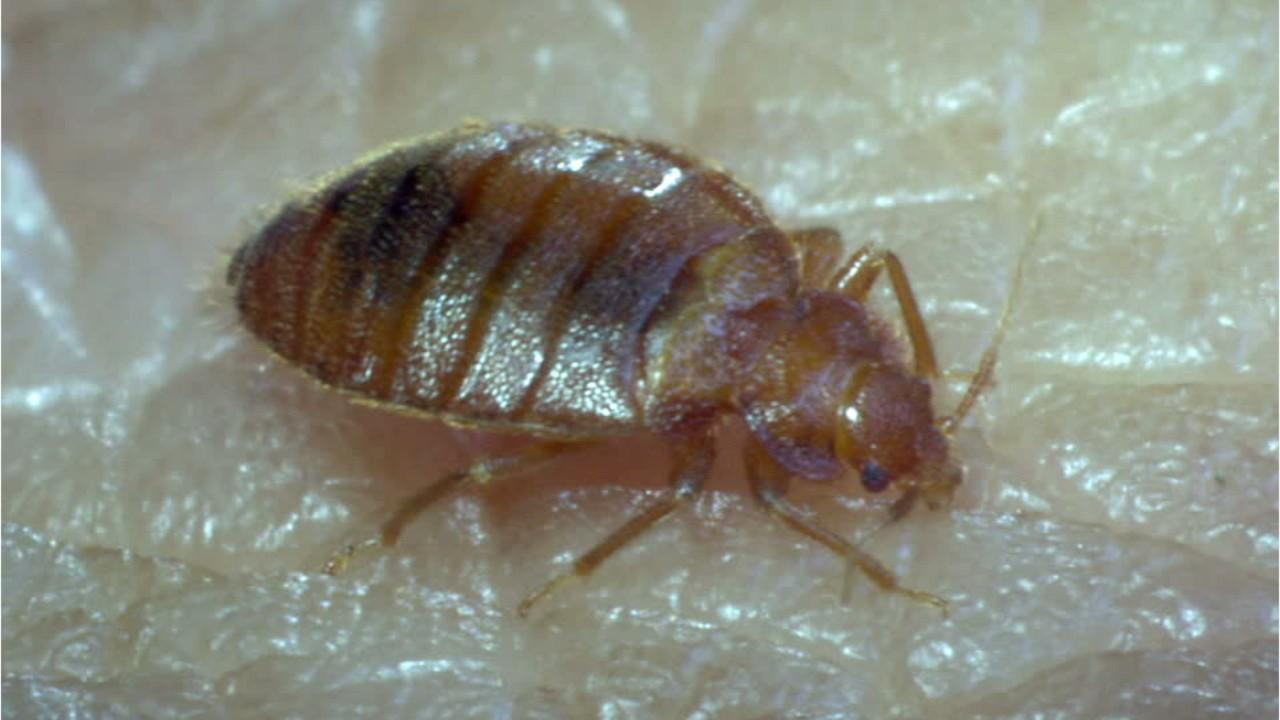 'While bedbugs have not been found to transmit any diseases to humans, they can be an elusive threat to households,' Chelle Hartzer, an Orkin entomologist, said.