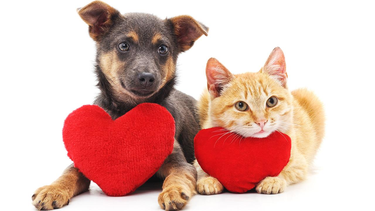 The National Retail Federation says that 27 percent of people will buy Valentine's Day gifts for their pets, totaling $1.7 billion spending.