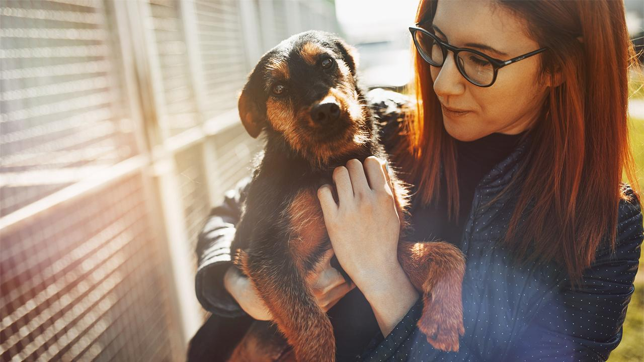 ASPCA CEO and President Matt Bershadker on the increase in people adopting and fostering pets during coronavirus quarantines and his organization's work to help vulnerable pet owners.